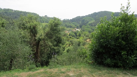 First photo of our backyard at Montemagno