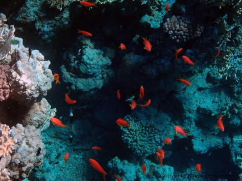 The deep blue beautiful Red Sea_and colorful fish