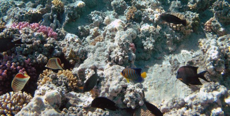 Amazing sea life in the Red Sea_2