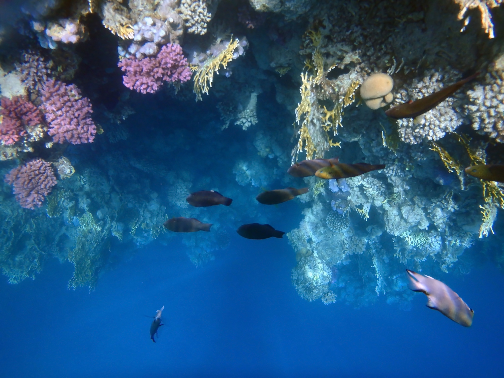 Red Sea is full of beauty EUROPE THE MEDITERRANEAN SEA THE RED SEA
