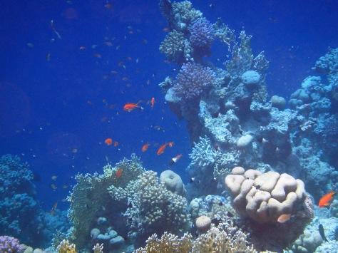 Beautiful Red Sea World 6