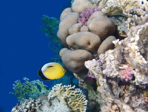 Glorious Red Sea World 3